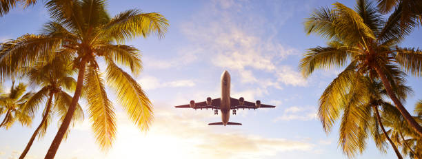 Coconut palms tree and airplane at sunset.Tropical holidays concept. stock photo