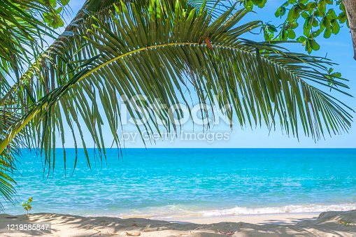 istock coconut palms tree and turquoise sea. 1219585847