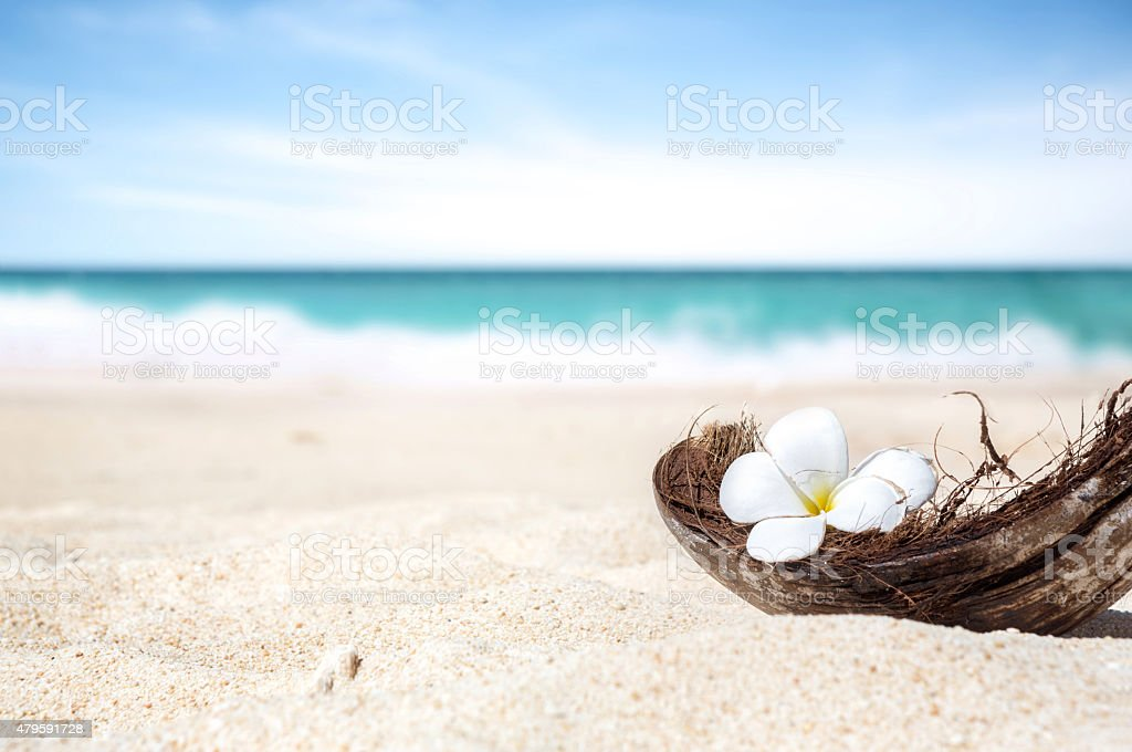 coconut shell on the sand of a beautiful beach stock photo