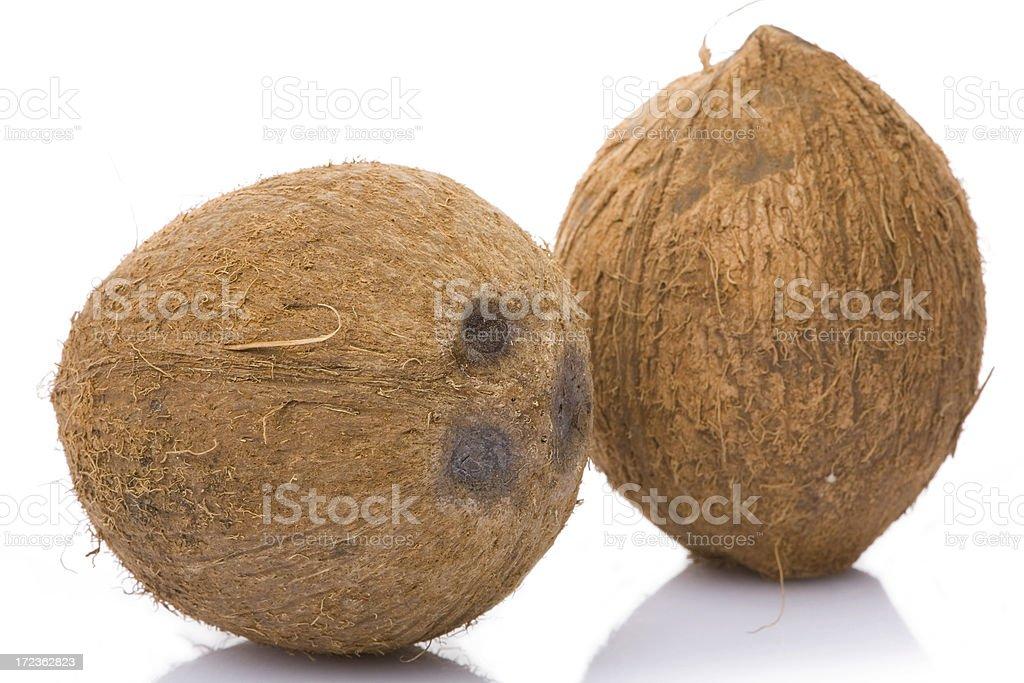 coconut studio shot royalty-free stock photo