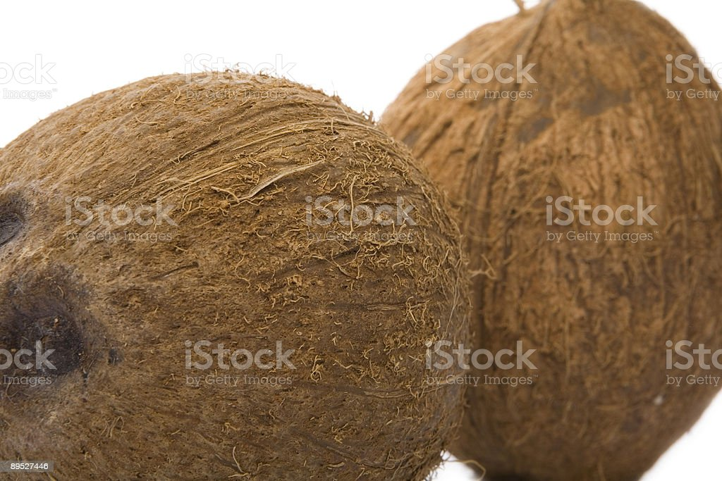 coconut studio shot stock photo