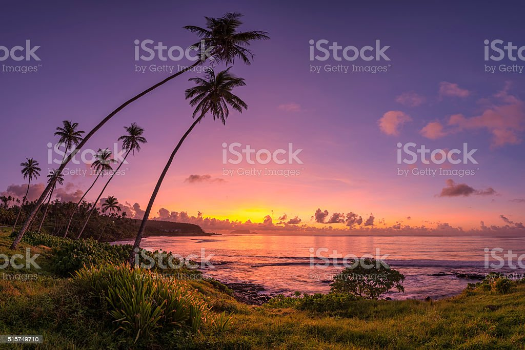 Coconut Sunrise stock photo