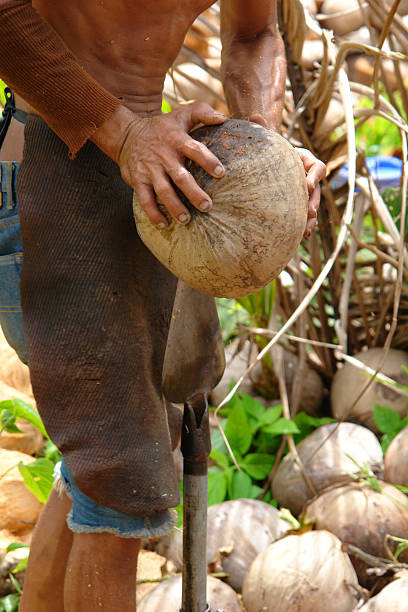 Coconut tool A working coconut farmer with a coconut tool cusp stock pictures, royalty-free photos & images