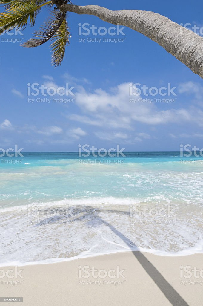 Coconut tree and a white sand beach royalty-free stock photo