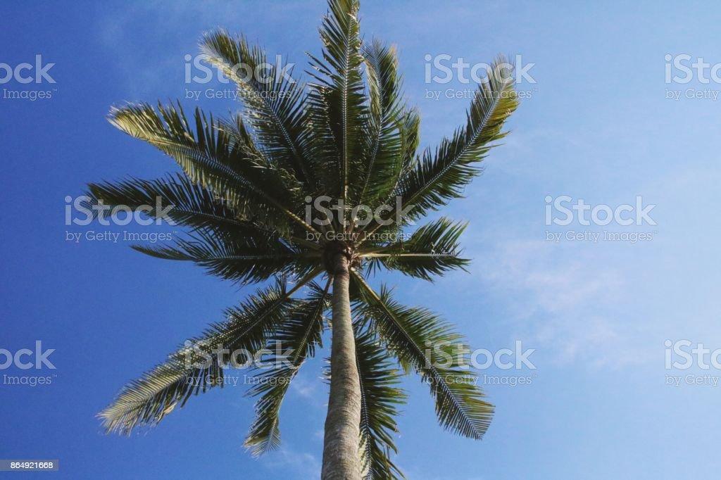Coconut tree at tropical sunny beach stock photo