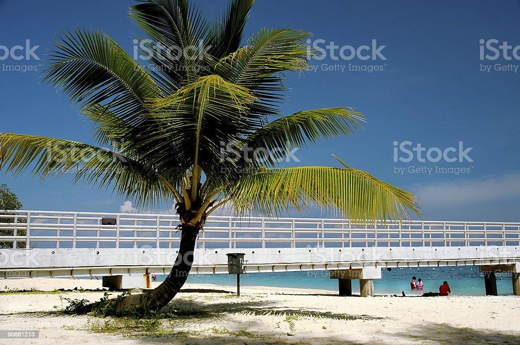 Coconut tree - beach