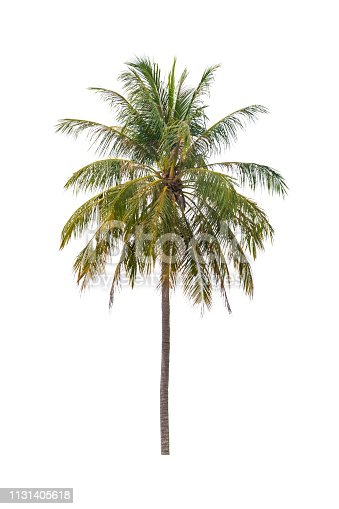 1146115746istockphoto coconut tree beautiful on white background 1131405618