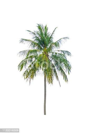 1146115746istockphoto coconut tree beautiful on white background 1133316309