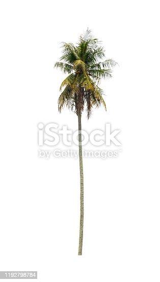 1146114680 istock photo coconut tree beautiful on white background 1192798784