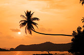 coconut tree hanging over the beach at sunset