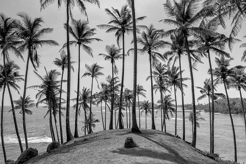 Coconut Tree Hill Stock Photo - Download Image Now