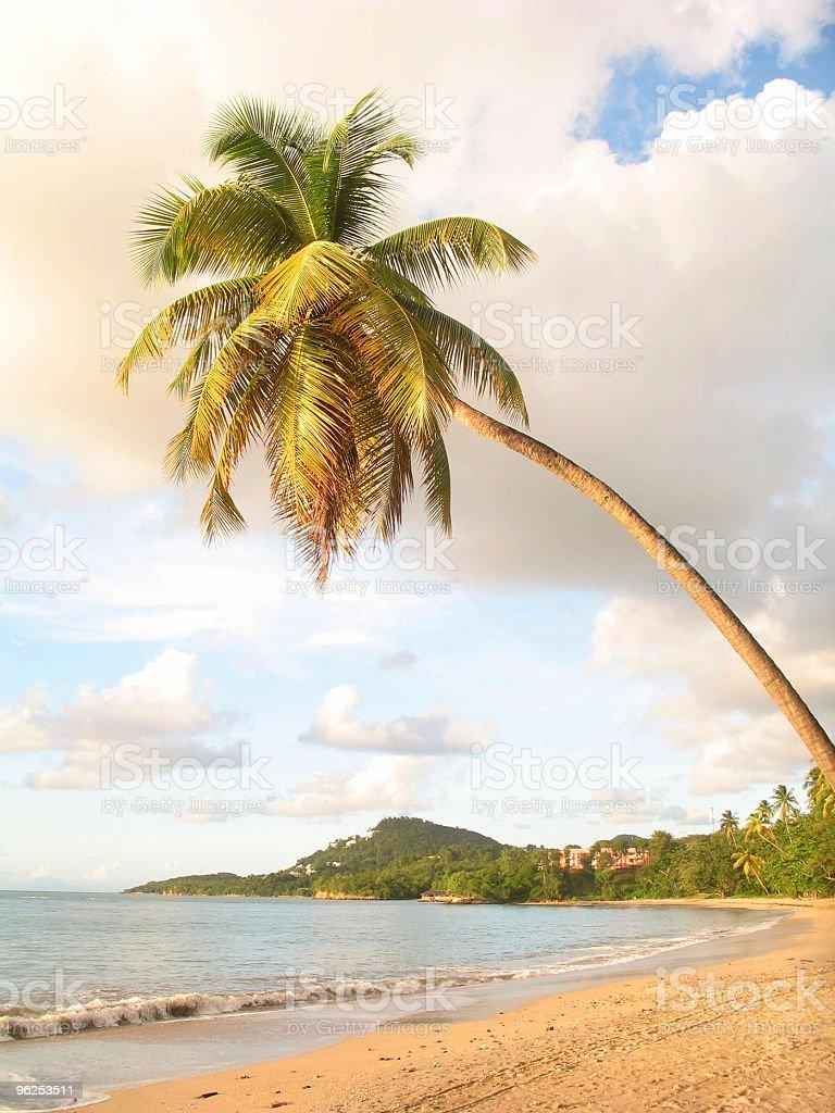 Coqueiro, no paraíso - Foto de stock de Beleza royalty-free