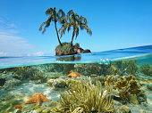 ココナッツ ツリー島とサンゴのヒトデ水中