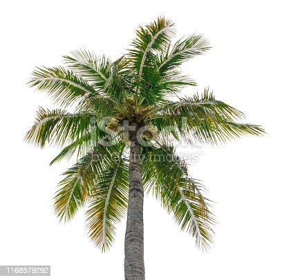 1145104190 istock photo coconut tree isolated beautiful on white background 1168579292