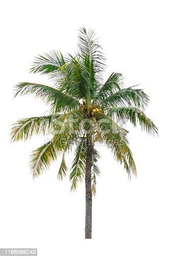 1146115746istockphoto coconut tree isolated beautiful on white background 1168586243