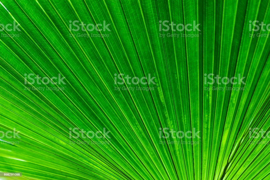 Coconut tree Leaves stock photo