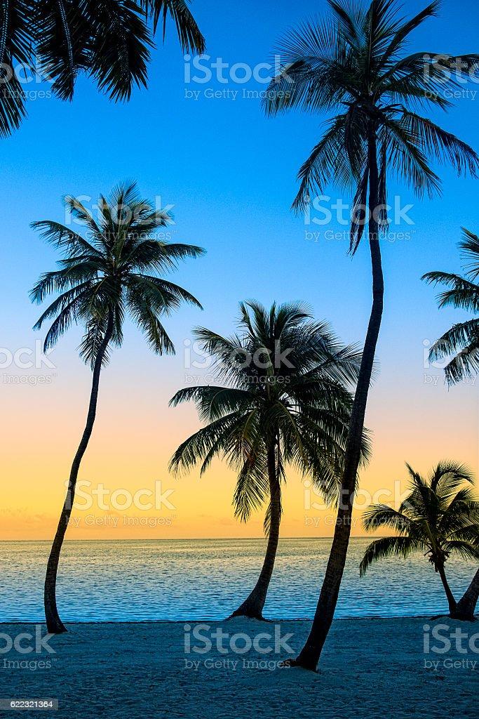 Coconut Tree Tropical Travel Background stock photo
