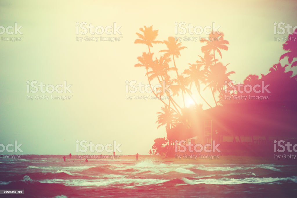 Coconut trees and Indian Ocean stock photo