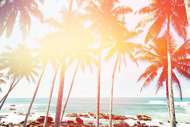 kokospalmen und den türkisfarbenen indischen ozean - palmengarten stock-fotos und bilder