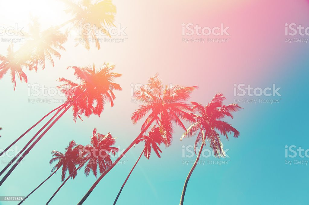 Coconut trees and turquoise Indian Ocean​​​ foto