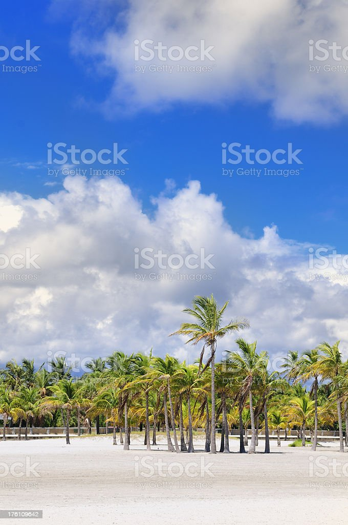coconut trees at miami beach wit cloudy sky