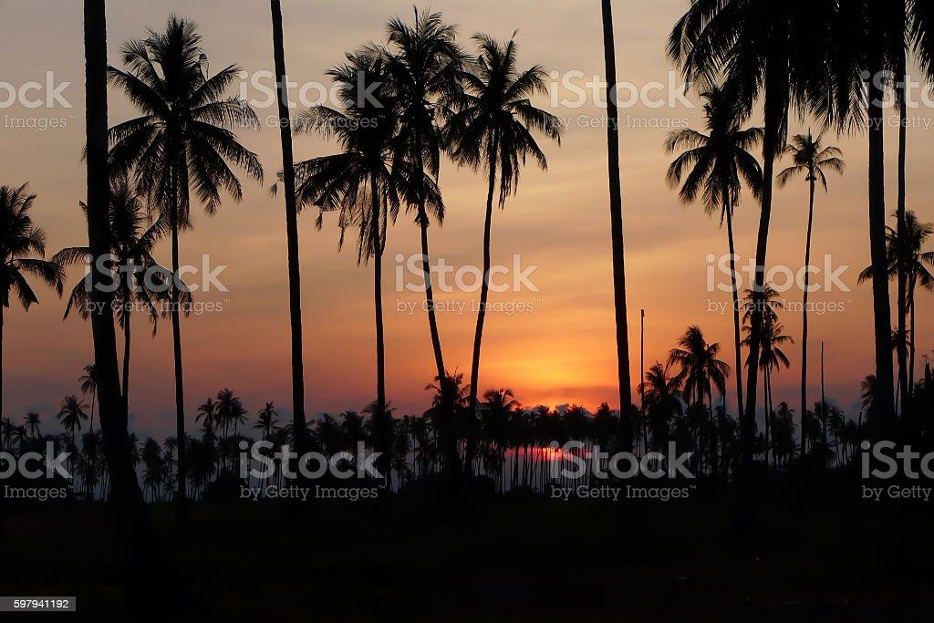 Coqueiros ao pôr-do-sol foto royalty-free