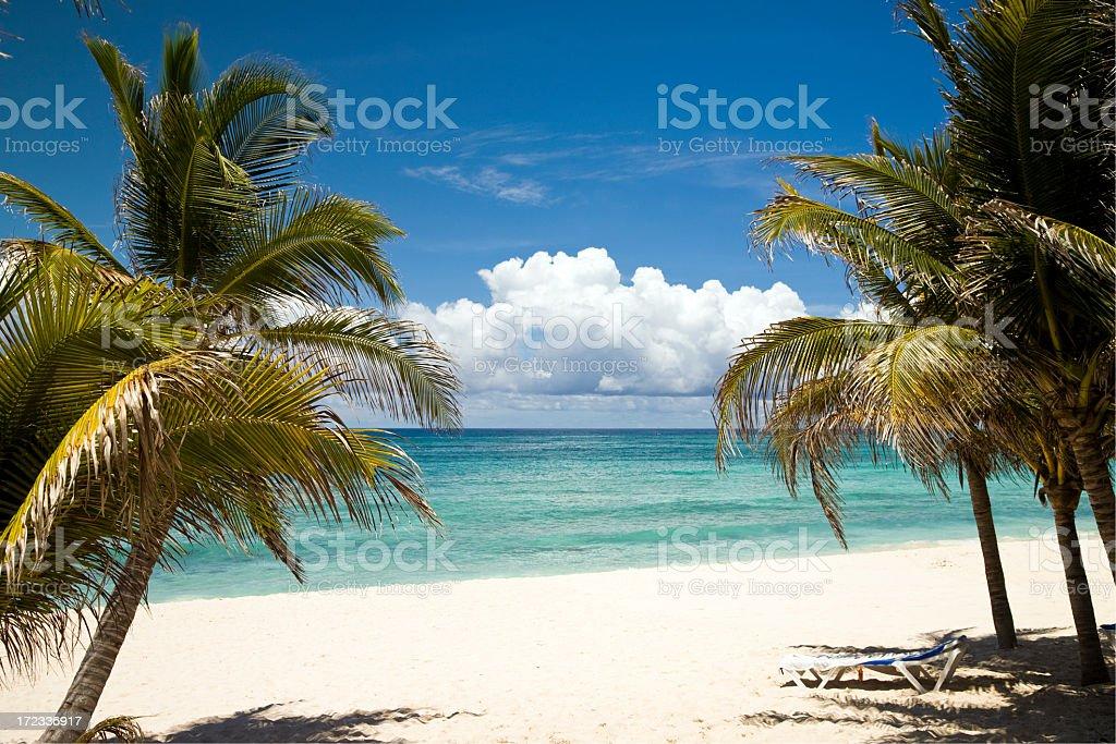 Coconut Trees at the greenish sea belt stock photo