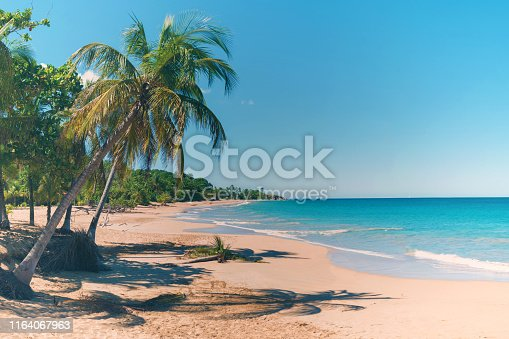 istock Coconut trees, golden sand, turquoise water and blue sky, pearl beach , Guadeloupe, French West Indies 1164067963