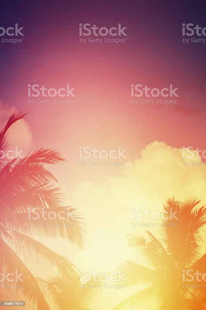 Coconut trees in sunset stock photo