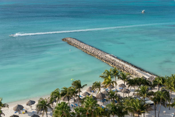 Kokospalmen im Sand an einem Strand in Aruba. Kleinere Antillen – Foto