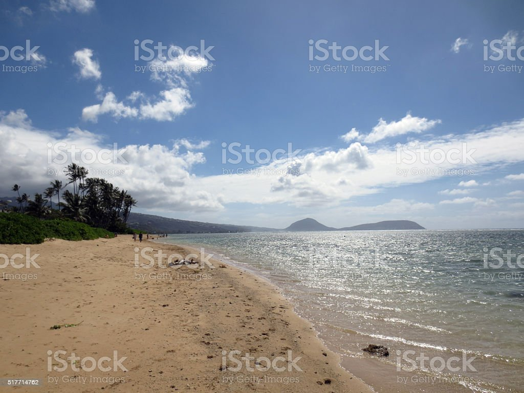 Coconut Trees line Kahala Beach stock photo