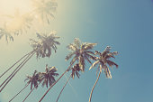 Coconut trees on the sky background. Image was taken in Sri Lanka. Vintage look post processing