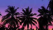 Coconut trees silhouette and colorful sky
