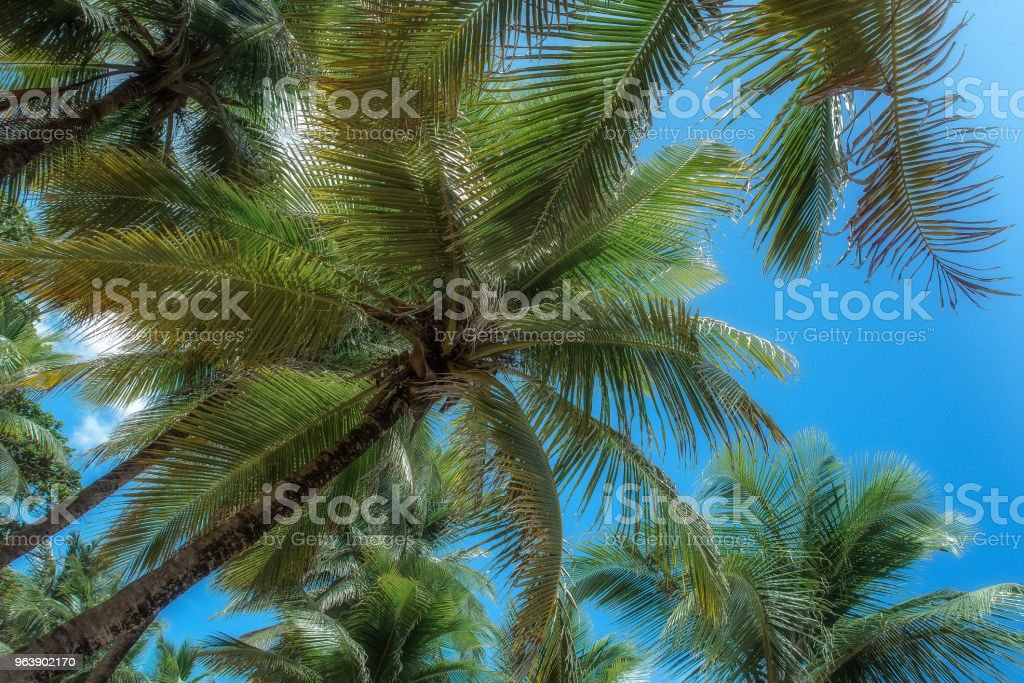 Coconut trees with blue sky and clouds - Royalty-free Bahia State Stock Photo