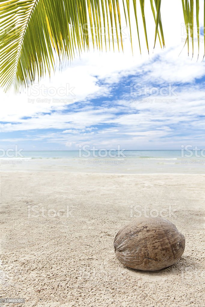 Coconut under palm trees on a lonely beach royalty-free stock photo