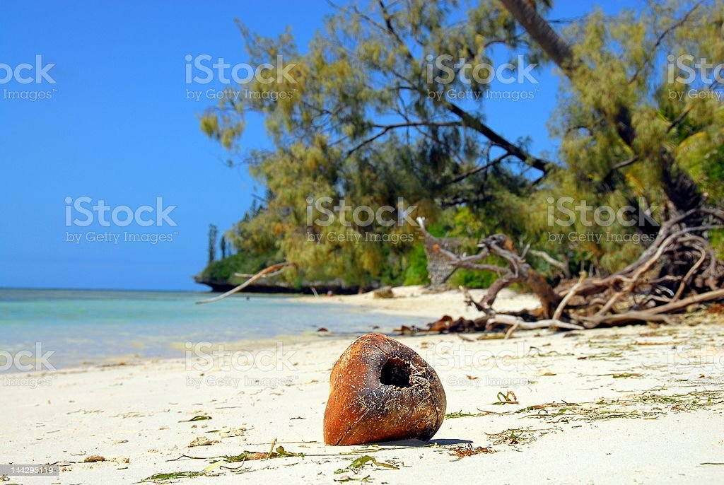 Coconut  - washed up and alone on a beach stock photo