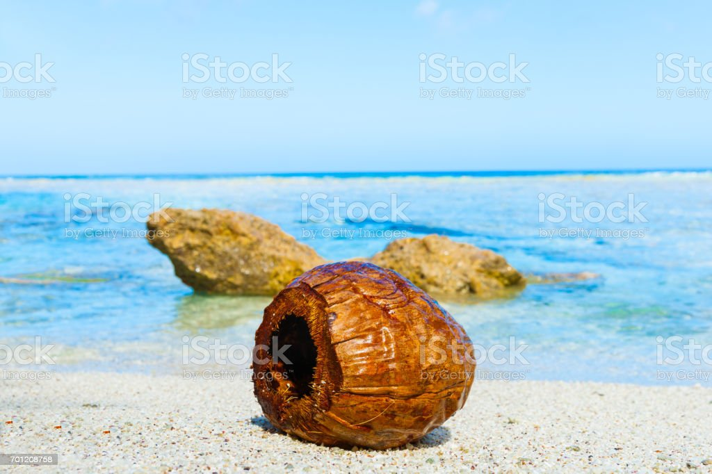 Coconut washed up on small isolated tropical beach stock photo