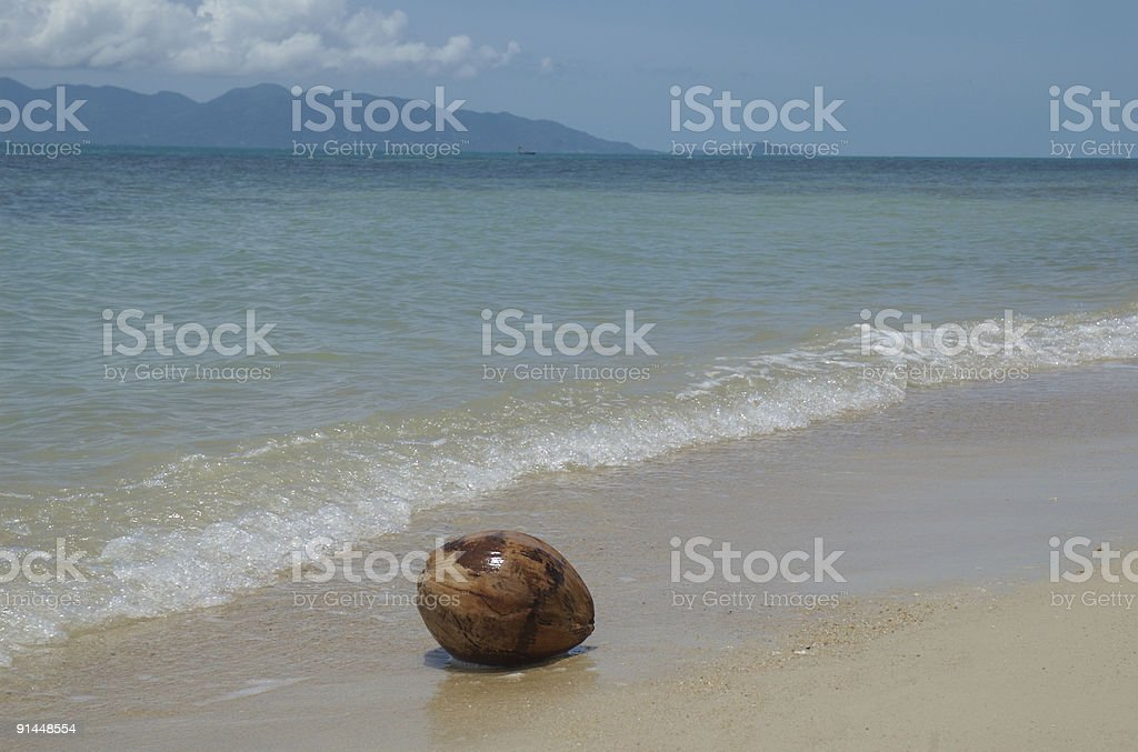 Coconut washed up stock photo