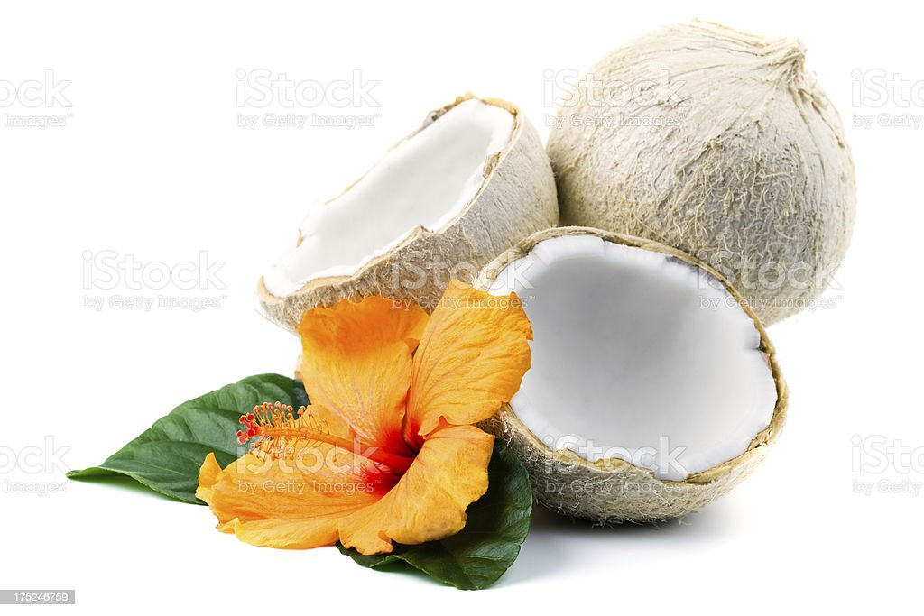 Coconuts and hibiscus royalty-free stock photo