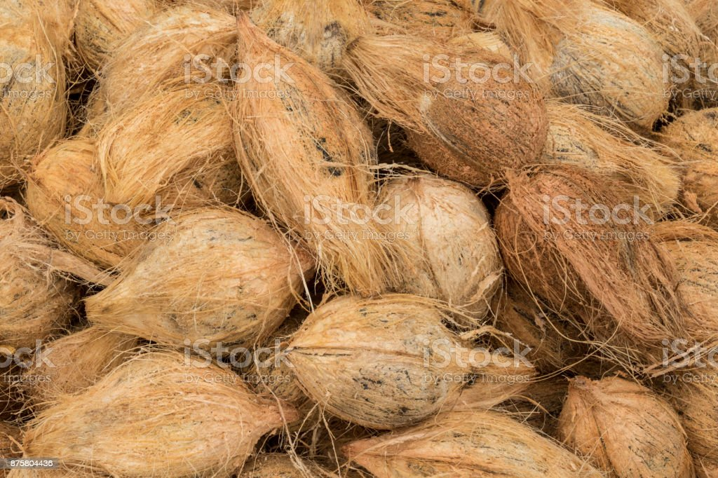 Coconuts for sale on the market stock photo