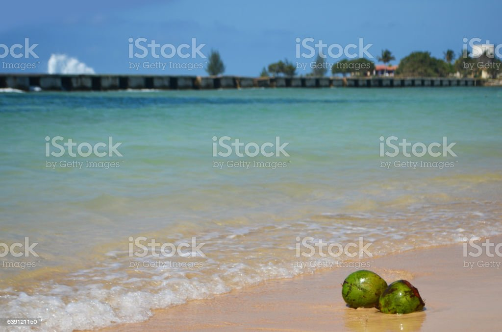 Coconuts in the seaside stock photo