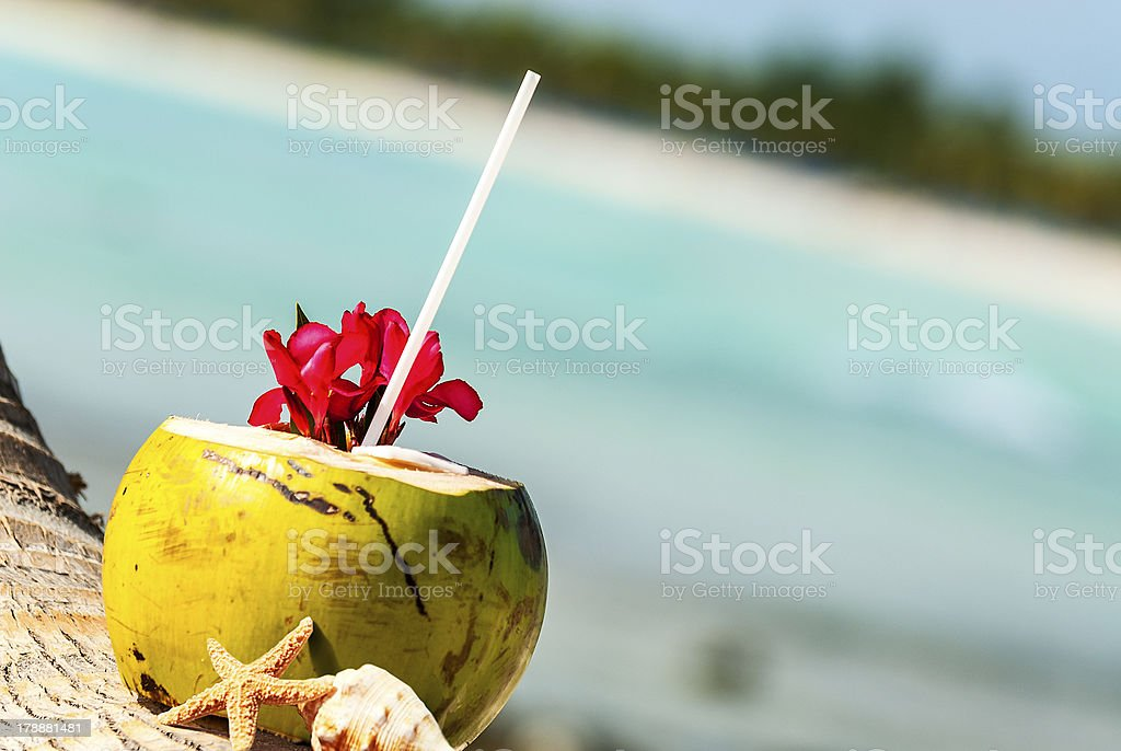 coconuts on the beach Coconut with drinking straw on a palm tree at the sea Animal Shell Stock Photo