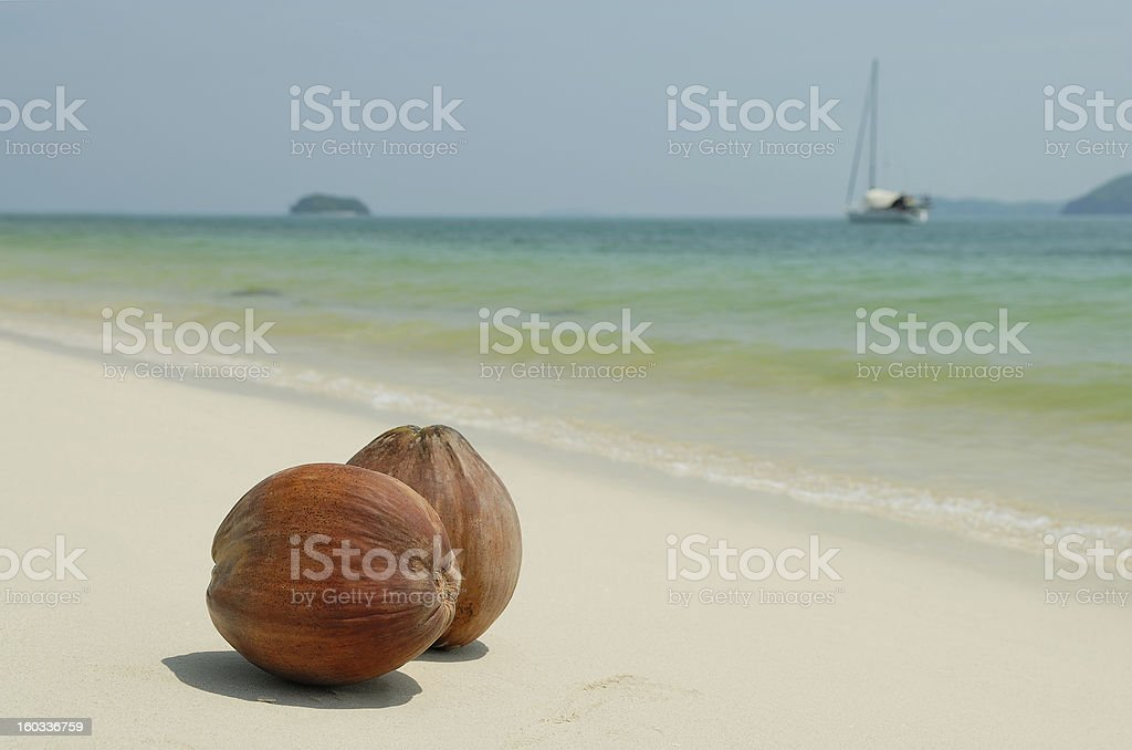 Coconuts on the white sandy beach of Thailand royalty-free stock photo