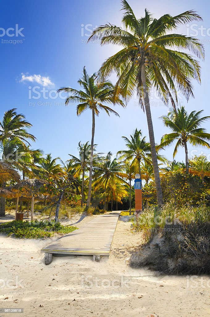 Coconuts on tropical beach path, cuba royalty-free stock photo