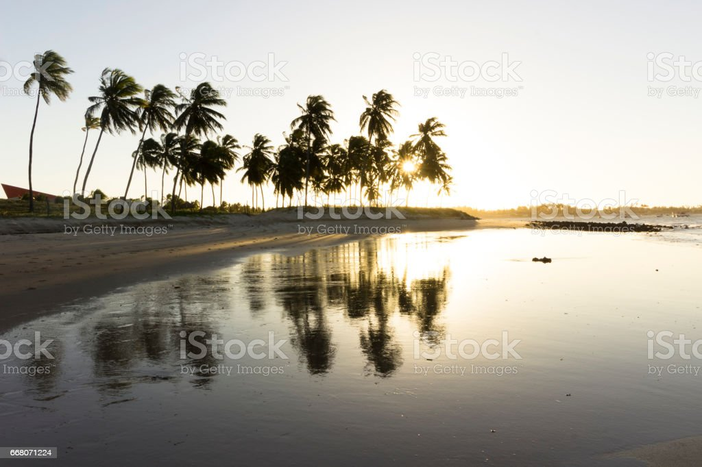 Coconuts tree and sunset on the beach stock photo
