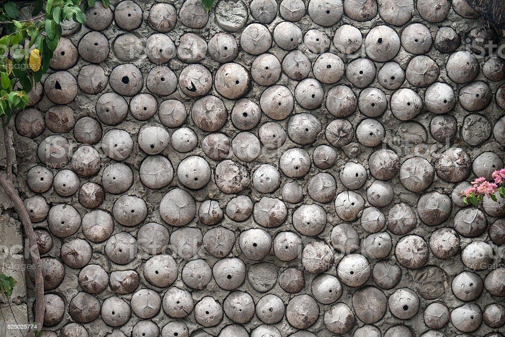 Coconuts wall stock photo