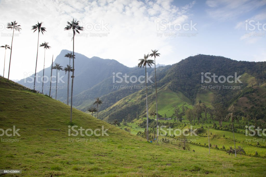 Cocora Valley, Colombia royalty-free stock photo