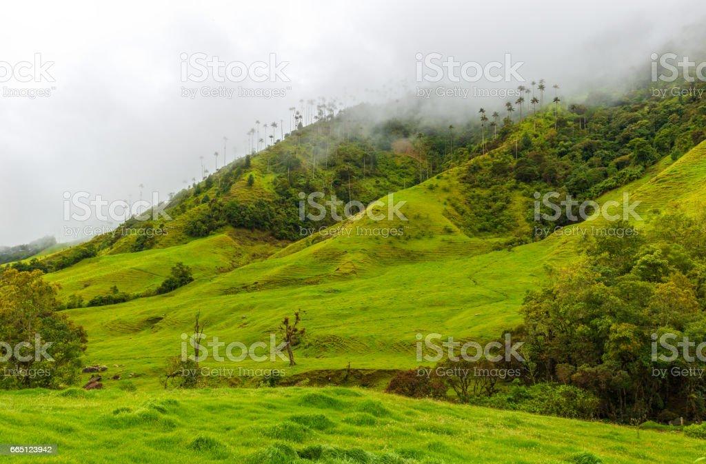 Cocora Valley стоковое фото
