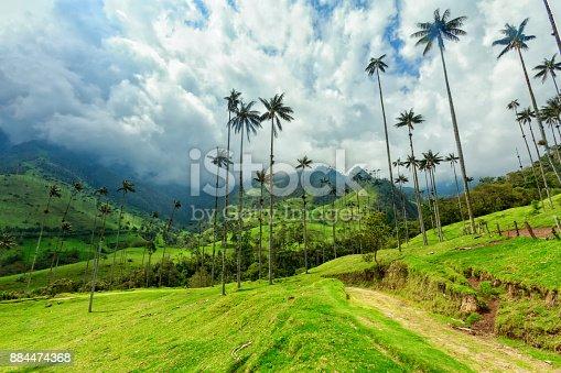 istock Cocora Valley 884474368