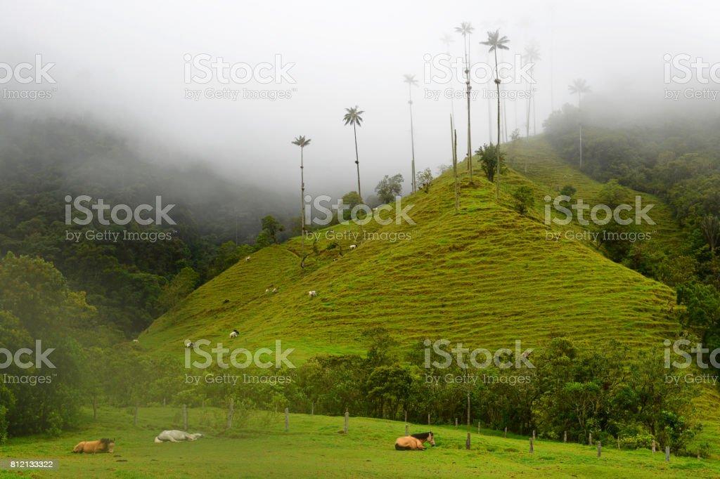 Cocora Valley with Wild Horses стоковое фото